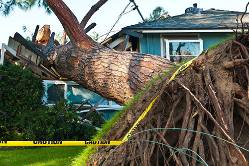 Old-huge-tree-crashes-into-home-due-to-storm